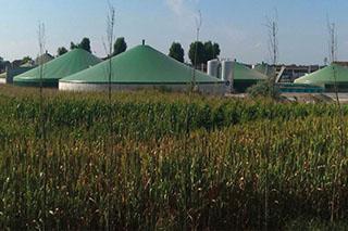 Nachgehakt: Konventionelles Biogas- Substrat auf Bio-Feldern? Stellungnahme der drei großen Bioverbände auf die Kritik von Biopionier Hans Glück